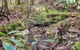 0 Jack's River - Photo 37