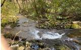 0 Jack's River - Photo 47