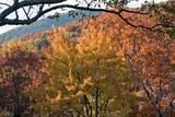 245 Sassafras Mountain Trl - Photo 74