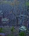 245 Sassafras Mountain Trl - Photo 86