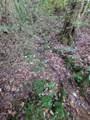1696 Shade Tree Drive - Photo 10