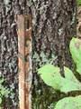 1696 Shade Tree Drive - Photo 22