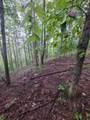 1696 Shade Tree Drive - Photo 4