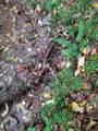 1696 Shade Tree Drive - Photo 8