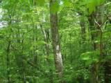 0 Wild Bird Lane (Alex Mountain) - Photo 6