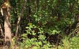 LOT 26 Lake Forest Estates - Photo 3