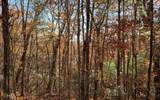LOT 49 Fires Creek Cove - Photo 20