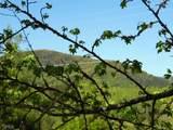 0 Unicoi Hills Trl - Photo 4