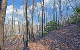 0 Rainwater Trail - Photo 6
