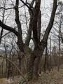 0 Bent Tree - Photo 7