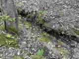 0 Hedgecock Road - Photo 35