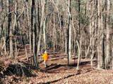 33.71 Acres - Rocktree Rd - Photo 18