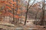 0 Enchanting Forest - Photo 15