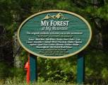 0 My Forest Trail - Photo 7