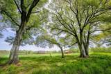 9559 Old Preserve Trail - Photo 7