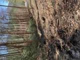 3.81 AC Flat Rock Gap - Photo 7