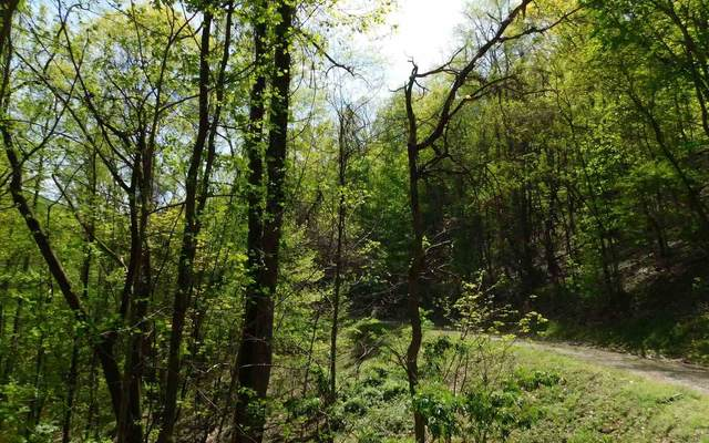 0 Hidden Springs Dr Lot 17, Brasstown, NC 28902 (MLS #8898330) :: Military Realty