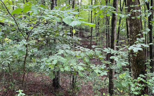 0 Mountain Harbour 45AC, Hayesville, NC 28904 (MLS #9019326) :: Rettro Group