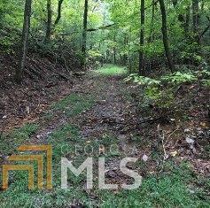 156 Lowman Rd, Ellijay, GA 30536 (MLS #8473841) :: Ashton Taylor Realty