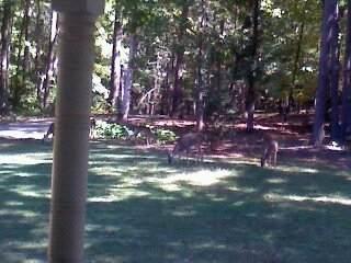 557 Teakwood Ridge - Photo 1