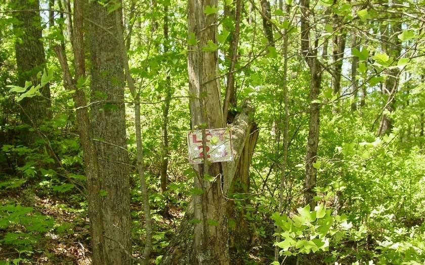 736 Deer Lane - Photo 1