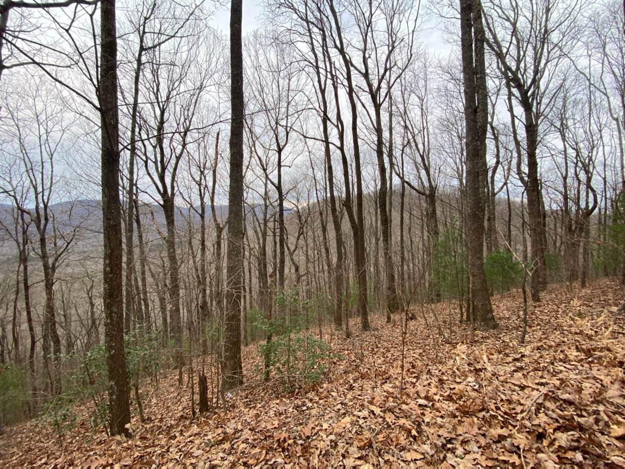 0 Big Creek Highlands - Photo 1