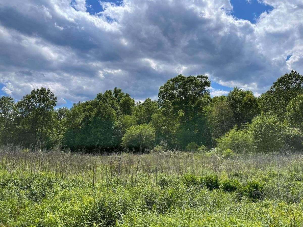 0 Corner Of Eagle Creek Farm Drive & Highway 136 - Photo 1
