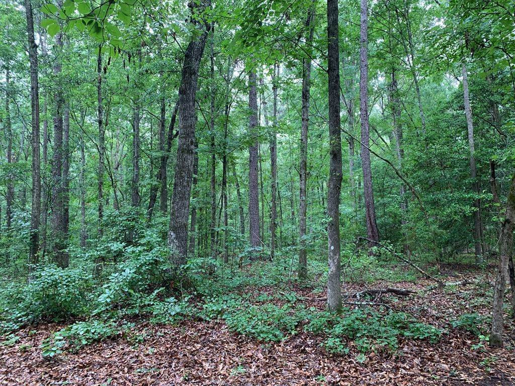 0 Deer Creek Trail - Photo 1
