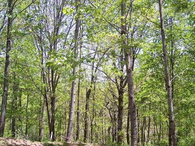 0 Schonberg Lane (Ridgepole Pt 9) - Photo 1