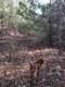 0 Pioneer Ridge - Photo 2