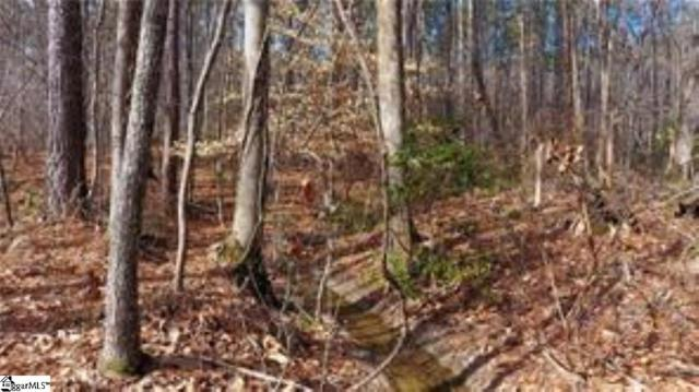 913 Mountain Mint Way, Salem, SC 29676 (MLS #1391487) :: Resource Realty Group
