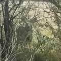 664 Box Canyon Court - Photo 9
