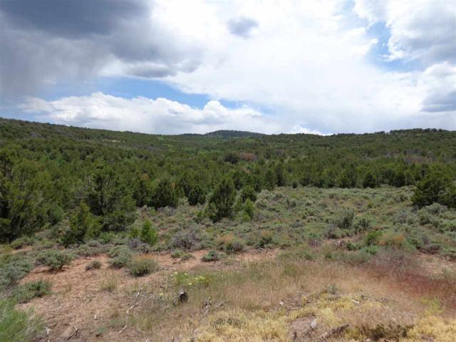 TBD Elk Reserve Road, Glade Park, CO 81523 (MLS #20174176) :: The Christi Reece Group