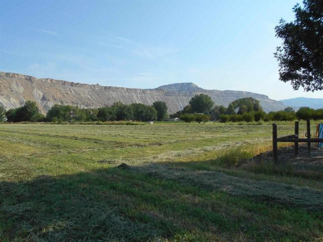 3594 G Road, Palisade, CO 81526 (MLS #20174747) :: The Grand Junction Group