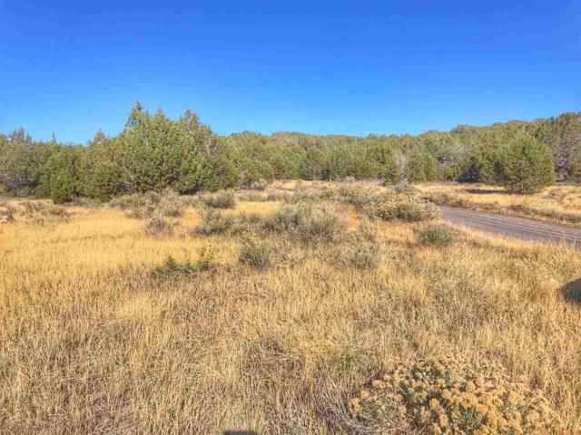 49566 Coon Creek Road, Mesa, CO 81643 (MLS #20185768) :: The Christi Reece Group