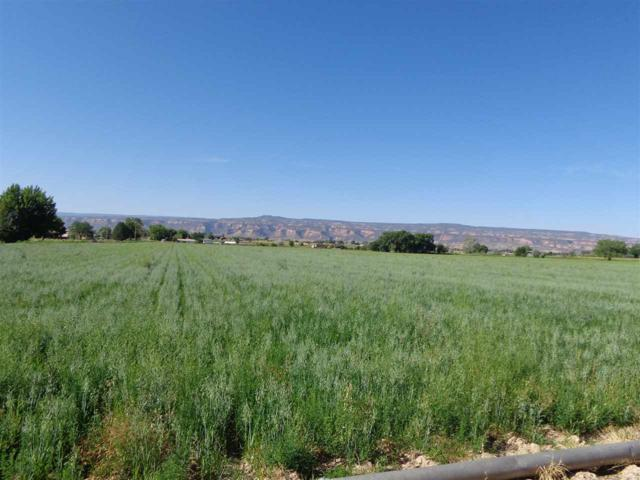 1347 18 1/2 Road, Fruita, CO 81521 (MLS #20193912) :: The Christi Reece Group