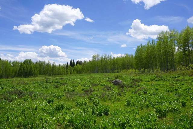 TBD Stevens Gulch Road, Paonia, CO 81428 (MLS #20196408) :: The Christi Reece Group
