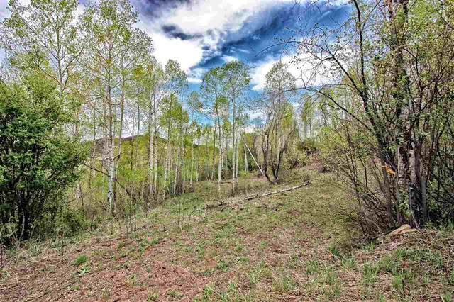 15738 Lariat Loop, Collbran, CO 81624 (MLS #20200748) :: The Danny Kuta Team