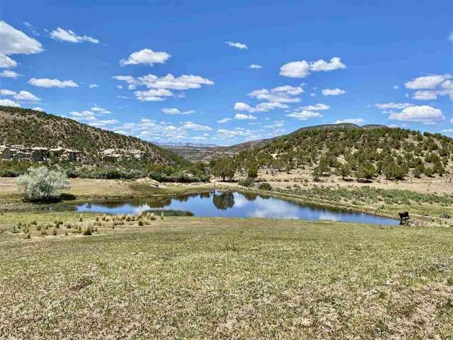 11288 48 1/4 Road, Mesa, CO 81643 (MLS #20202465) :: The Christi Reece Group