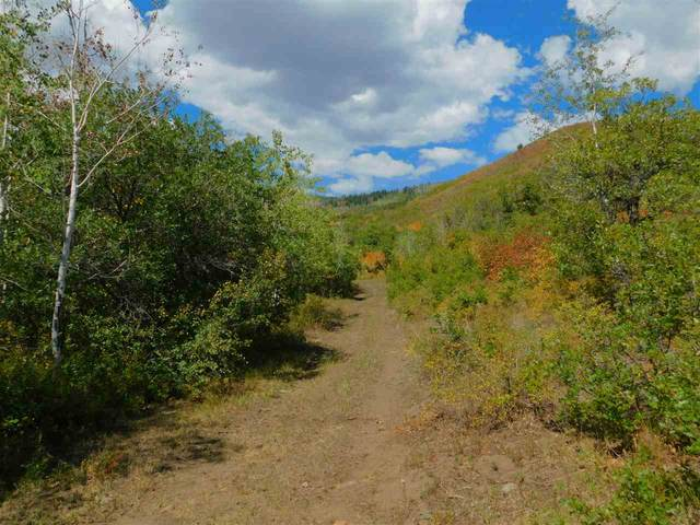 Lot 12 Aspen Hills Road, Cedaredge, CO 81413 (MLS #20204569) :: The Christi Reece Group