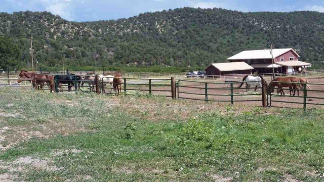 19561 Kimball Creek Road, Collbran, CO 81624 (MLS #20174275) :: The Grand Junction Group