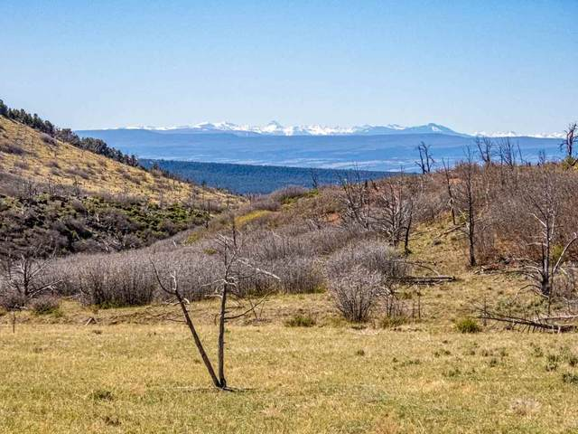 18495 Currant Creek Road, Cedaredge, CO 81413 (MLS #20211988) :: The Grand Junction Group with Keller Williams Colorado West LLC