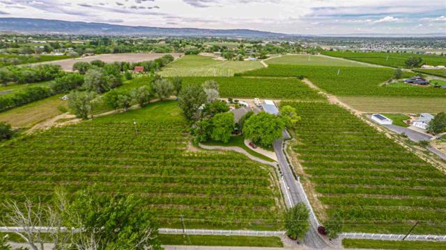 333 33 1/2 Road, Palisade, CO 81526 (MLS #20192654) :: The Grand Junction Group with Keller Williams Colorado West LLC