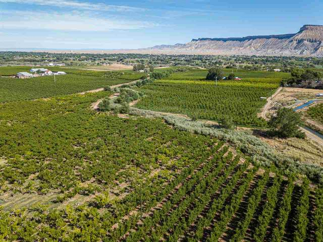 451 35 Road, Palisade, CO 81526 (MLS #20196289) :: The Christi Reece Group