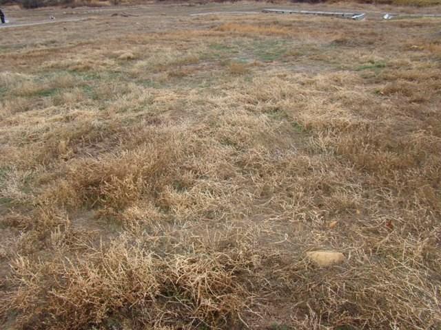 1003 1/2 Pritchard Mesa Court, Grand Junction, CO 81505 (MLS #20186095) :: CapRock Real Estate, LLC
