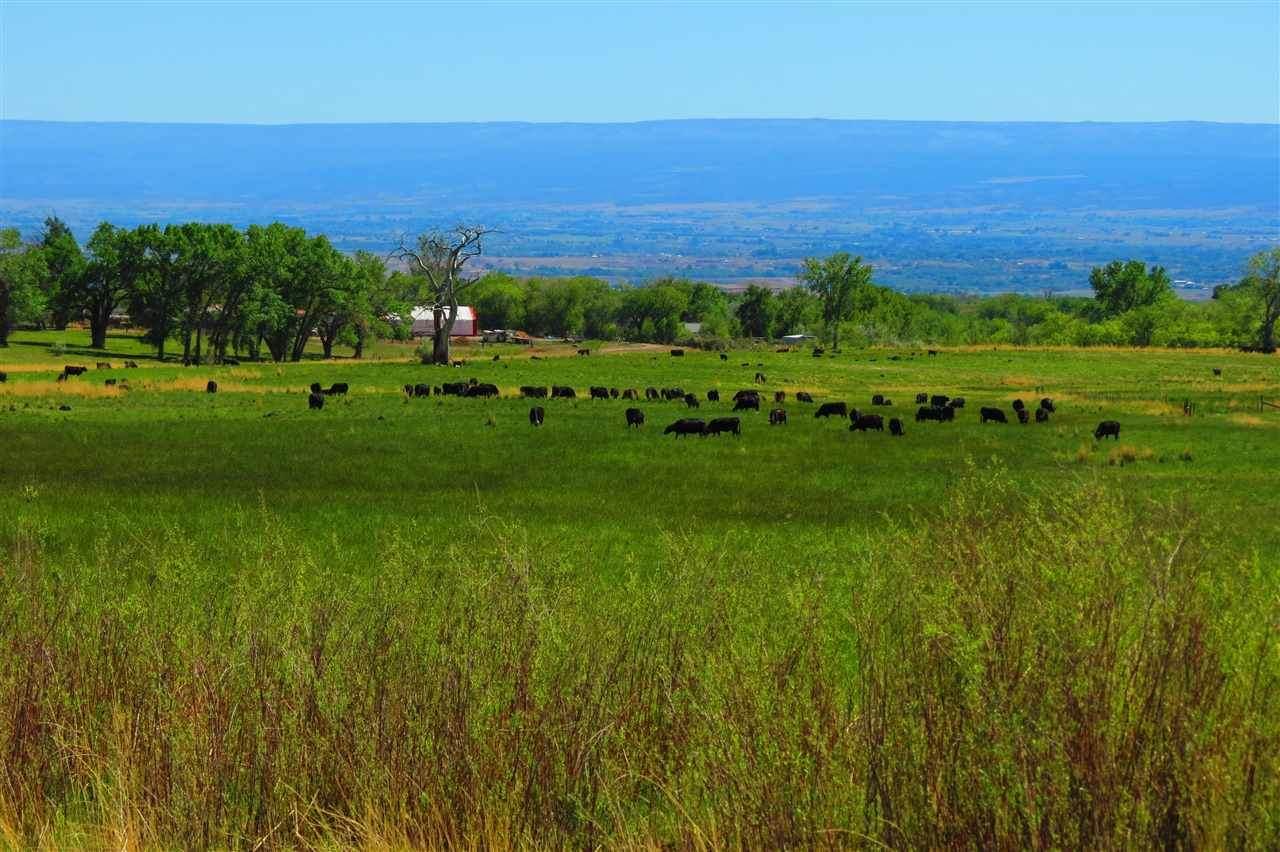 2970 Grand Mesa Drive - Photo 1
