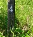 8419 Heron Lake Hills - Photo 6
