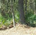 Lot 11 Old Cane Mill Drive - Photo 1