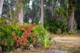 0 Fiddler Island Drive - Photo 8