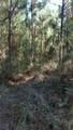 0 Ga Hwy 251 (66.65 Acres) - Photo 4